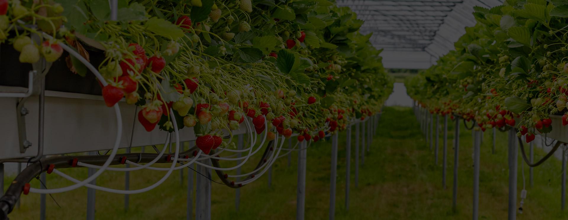 Agricoltura 4.0 - automazione